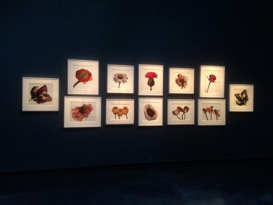 Flowers by Irving Penn