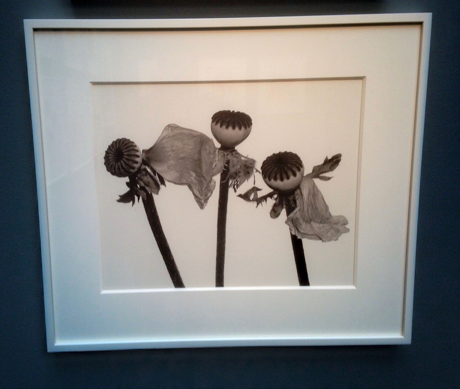 Irving Penn Flowers